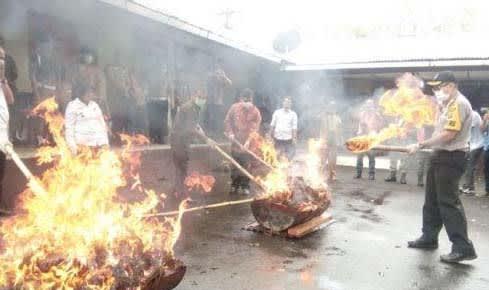 Polres Padangsidimpuan Musnahkan 49 Kg Ganja