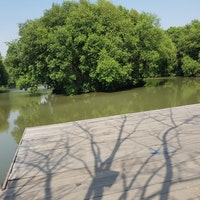 Potensi Hutan Mangrove Upaya Genjot PAD Desa